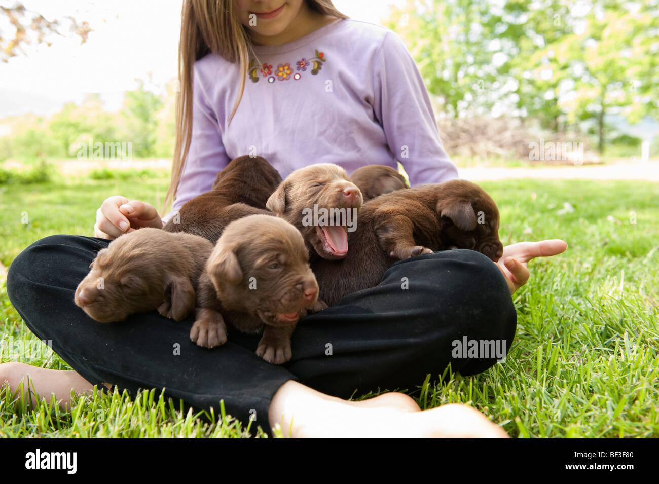 Adolescente cuccioli di contenimento Immagini Stock