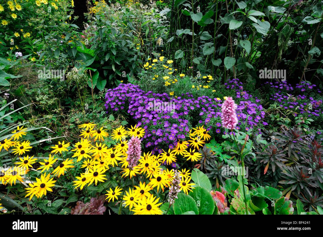 Piante Perenni Per Aiuole colori d'autunno tarda estate fioritura piante erbacee