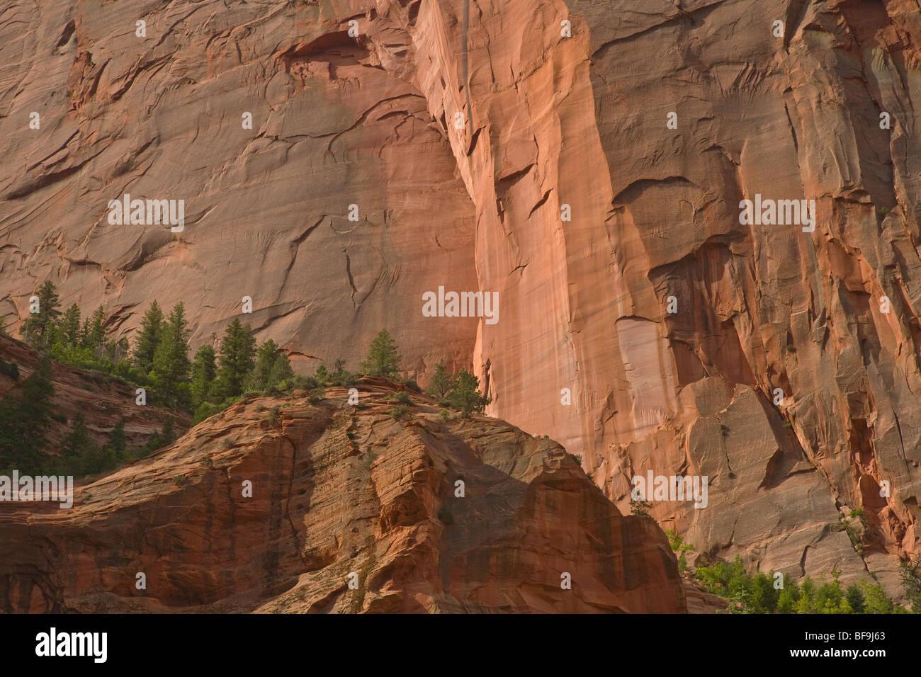 Pareti di pietra arenaria Navajo salire al di sopra della forcella centrale di Taylor Creek Trail, in Kolob Canyon Immagini Stock