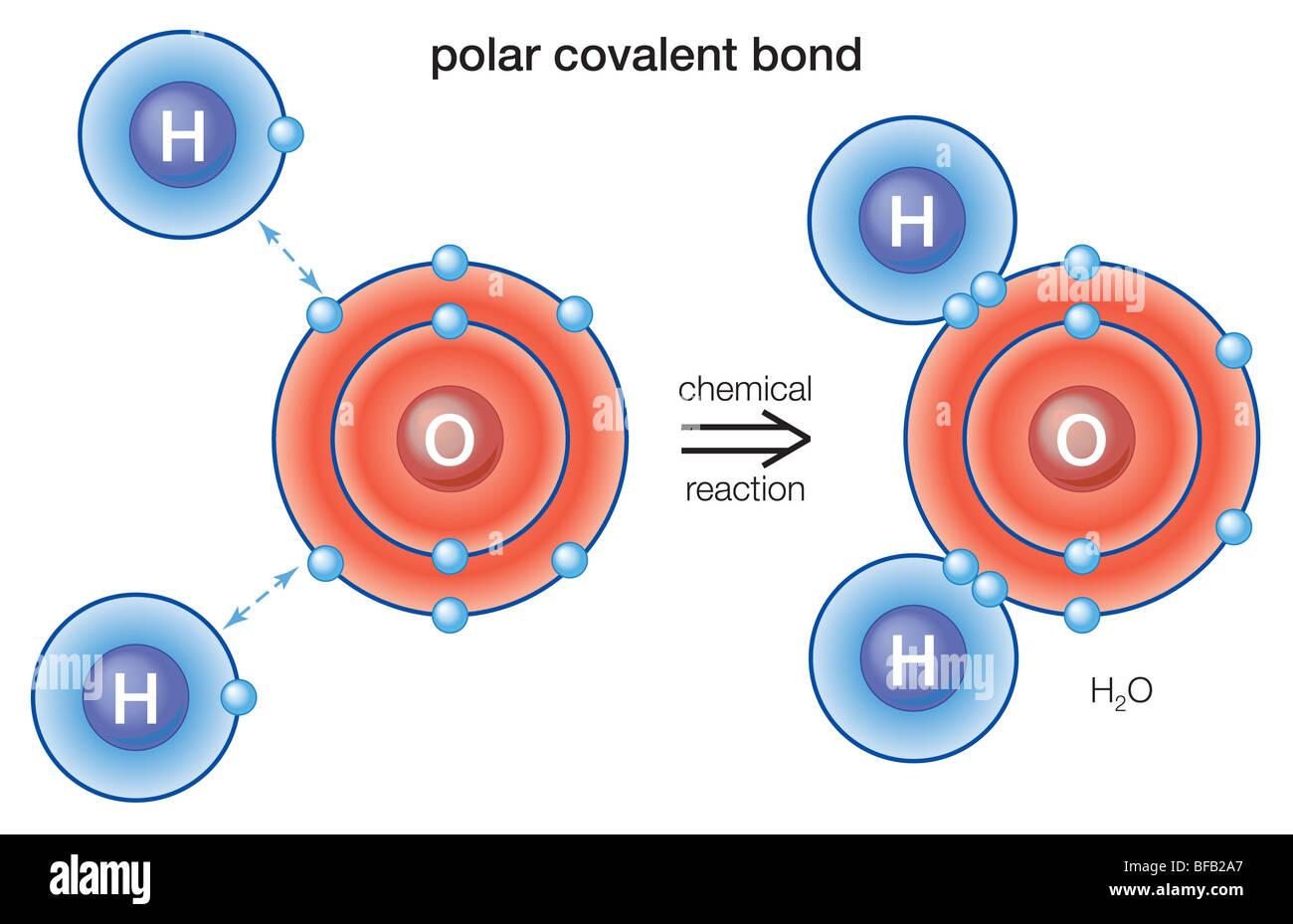 Polari legame covalente Immagini Stock