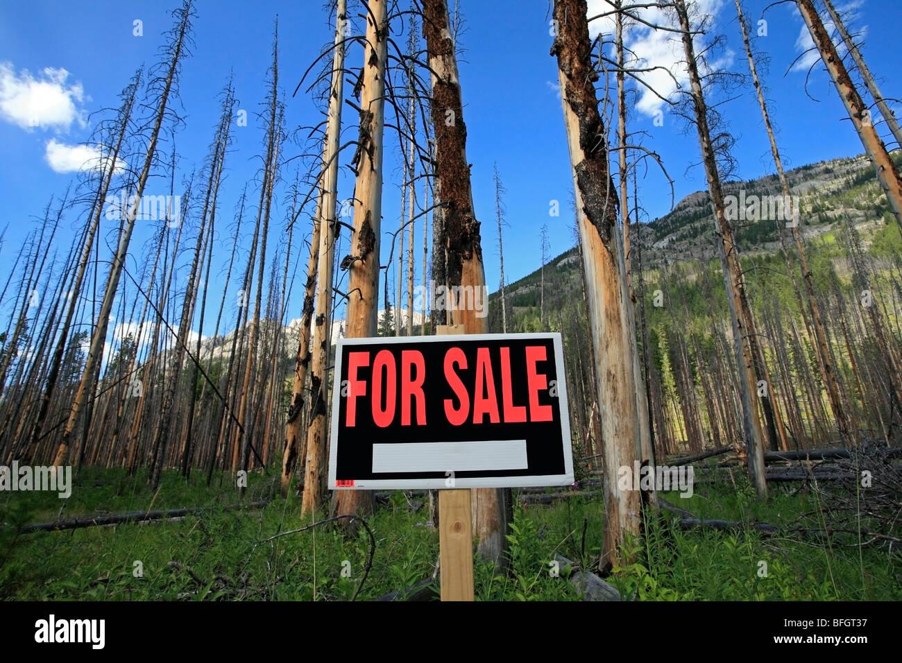 Alberi bruciati con in vendita segno. Il Parco Nazionale di Banff, Alberta, Canada Immagini Stock