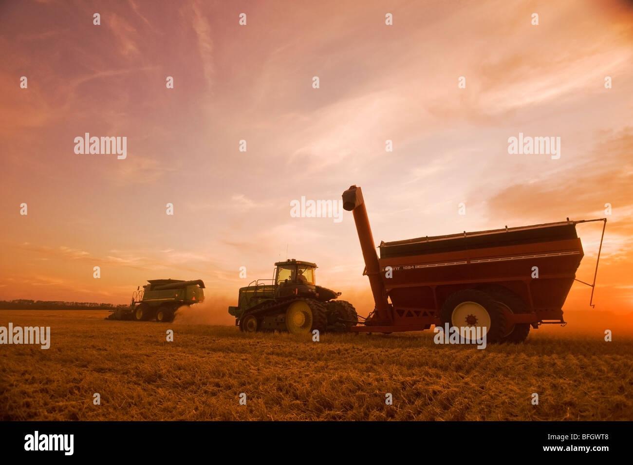 Macchina mietitrebbiatrice funziona un campo di swathed frumento primaverile. Vicino a Somerset, Manitoba, Canada Foto Stock