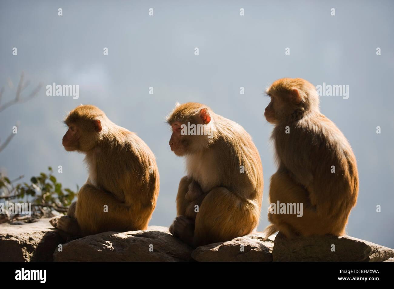 Cina, provincia di Jiangxi, tre scimmie, monte Lushan, Patrimonio Mondiale dell Unesco Immagini Stock