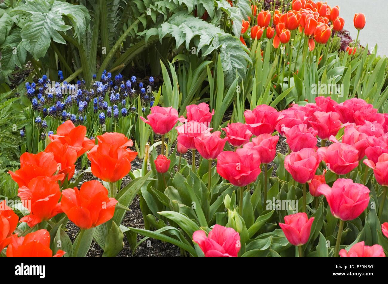 Fiore di primavera confine Foto Stock