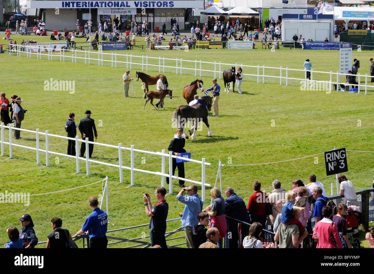 A giudicare del pony concorsi nell'anello principale al 2009 Royal Highland Show, Edimburgo. Immagini Stock
