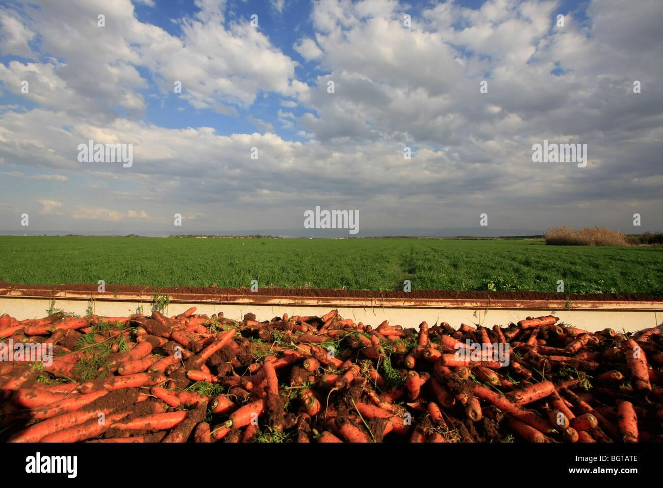 Israele, Beth Shean valley. Campi da Ein Moda Immagini Stock