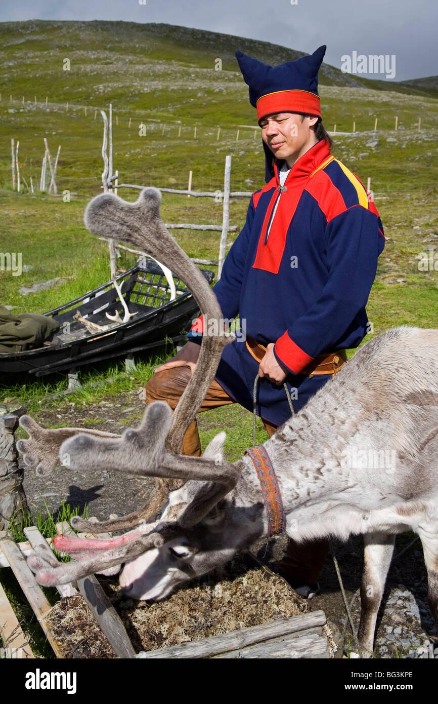 Sami con le renne, Isola Mageroya, Regione Finnmark, Norvegia, Scandinavia, Europa Immagini Stock