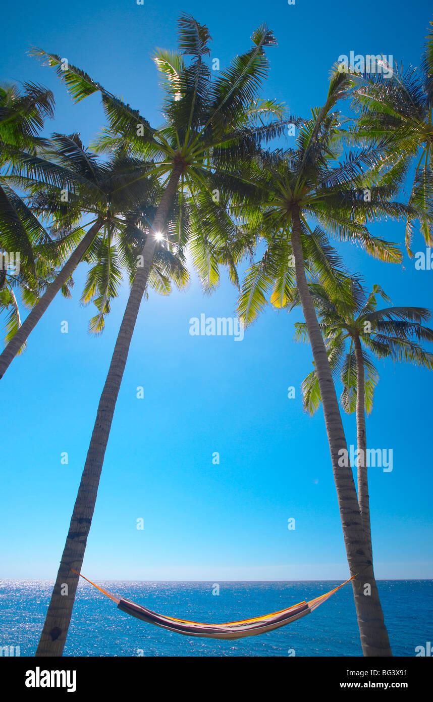 Amaca tra palme sulla spiaggia, Bali, Indonesia, Asia sud-orientale, Asia Immagini Stock