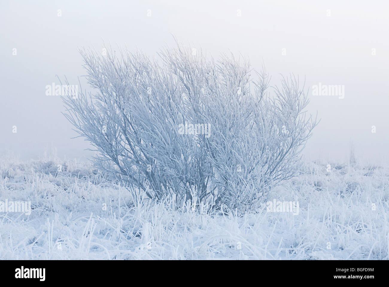 Albero solitario isolato dalla nebbia in un freddo inverno mattina Immagini Stock