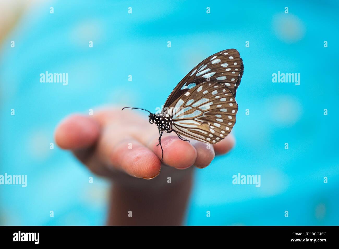 Tirumala limniace. Blue Tiger butterfly sulle mani di una ragazza indiana. India Immagini Stock