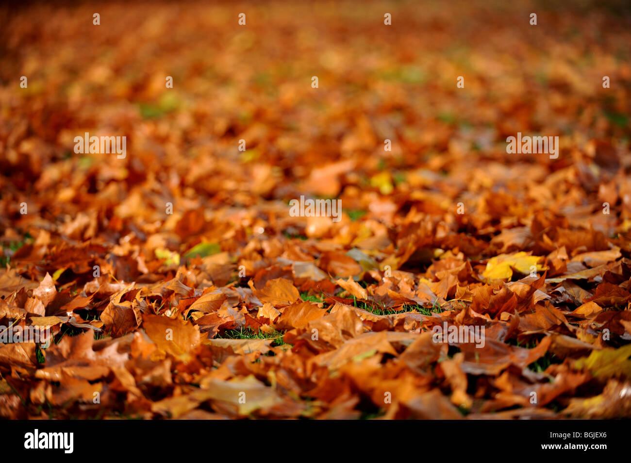 Foglie di autunno giacciono a terra Immagini Stock