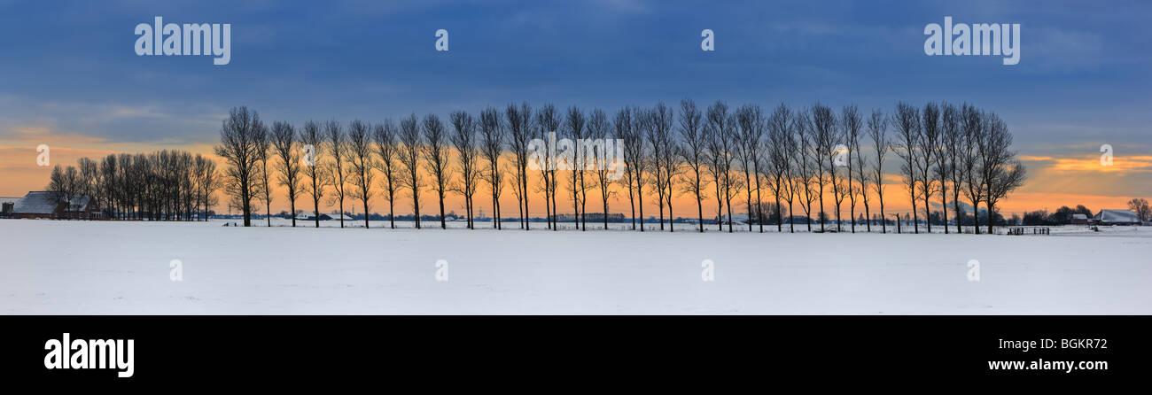 Winterlight a Groningen, dicembre 2009. Tra Winsum en Garnwerd Immagini Stock