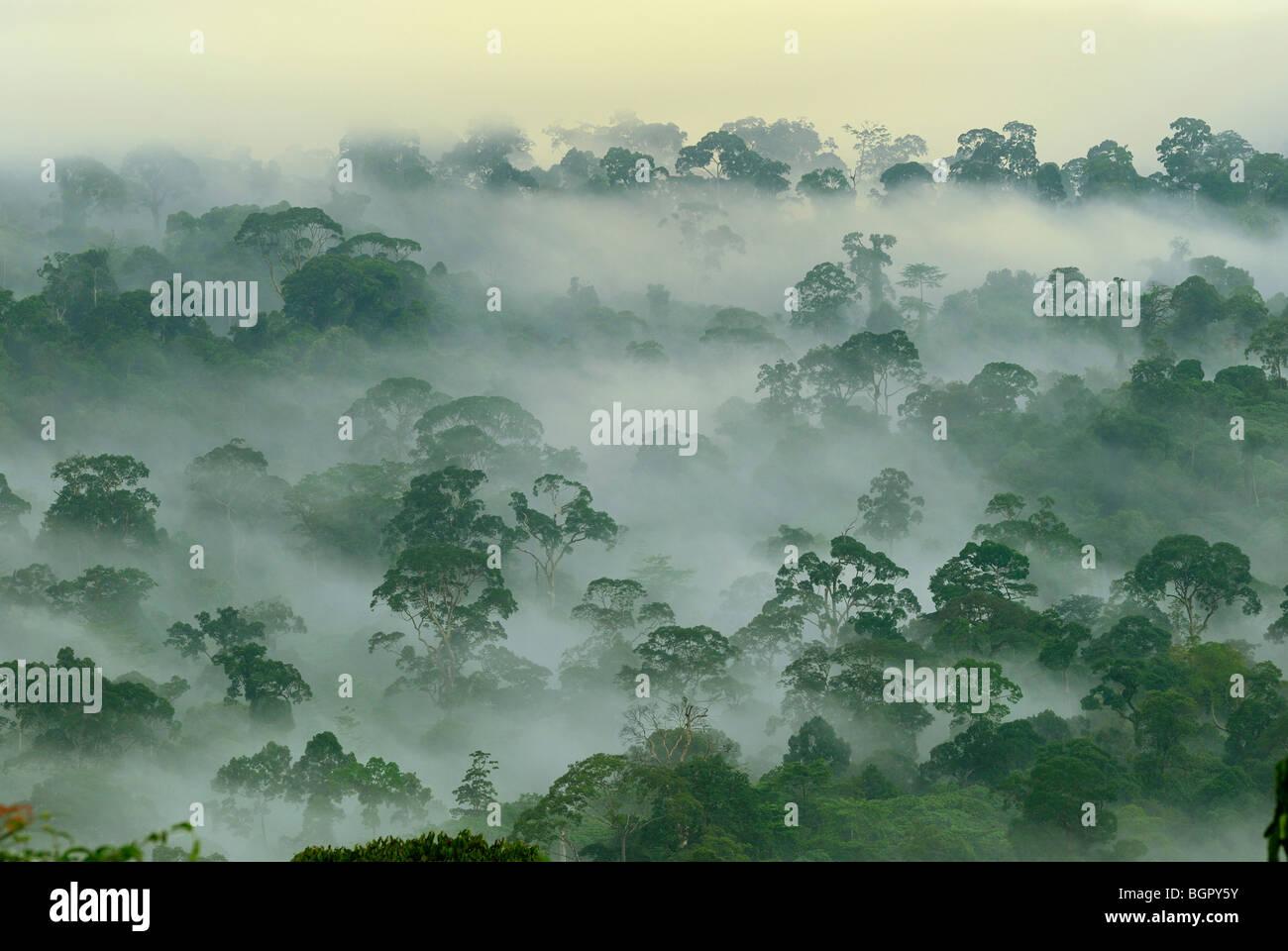 Baldacchino della foresta pluviale di pianura all'alba, di Danum Valley Conservation Area, Sabah Borneo, Malaysia Immagini Stock