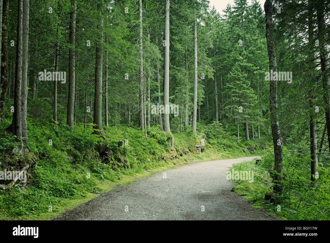 Percorso di foresta sentiero percorso in Baviera Germania Europa Immagini Stock