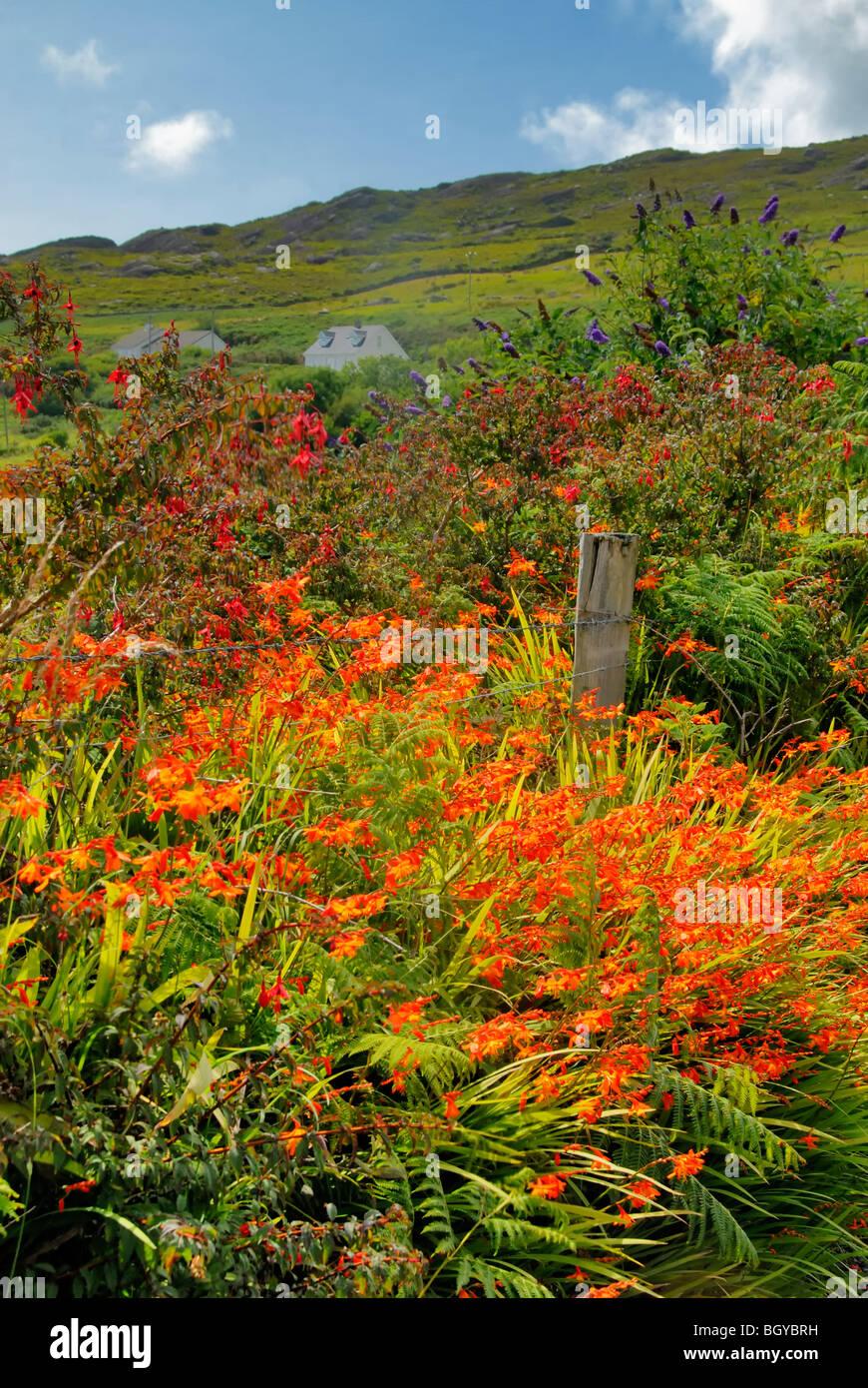 Fiori di campo in un paese di scena Killarney Irlanda Immagini Stock