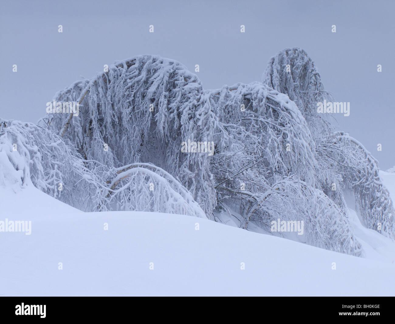 Condizioni meteorologiche estreme - inverno - brina e gelo vetrato Immagini Stock
