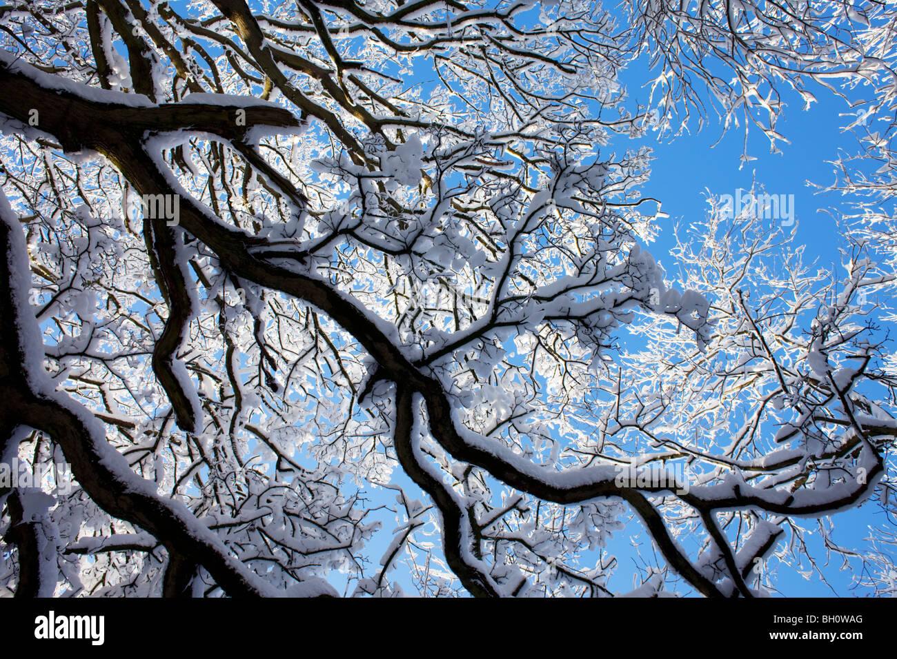 Una coperta di neve albero vicino a Snowshill in Cotswolds, REGNO UNITO Immagini Stock