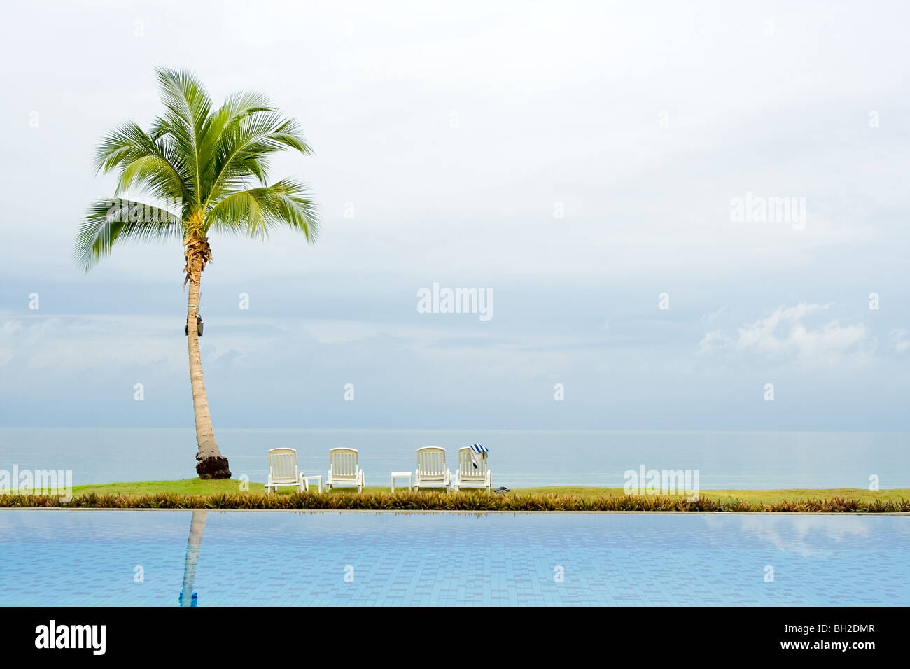 Palm tree a lato della piscina Immagini Stock