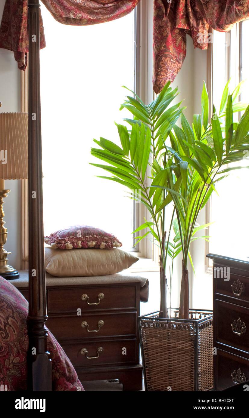 Palm tree in camera da letto impostazione Immagini Stock