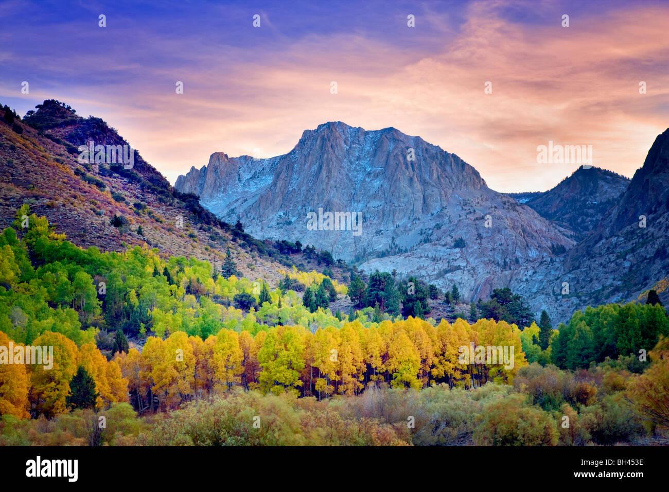 Carson picco e caduta aspens colorati. California Immagini Stock