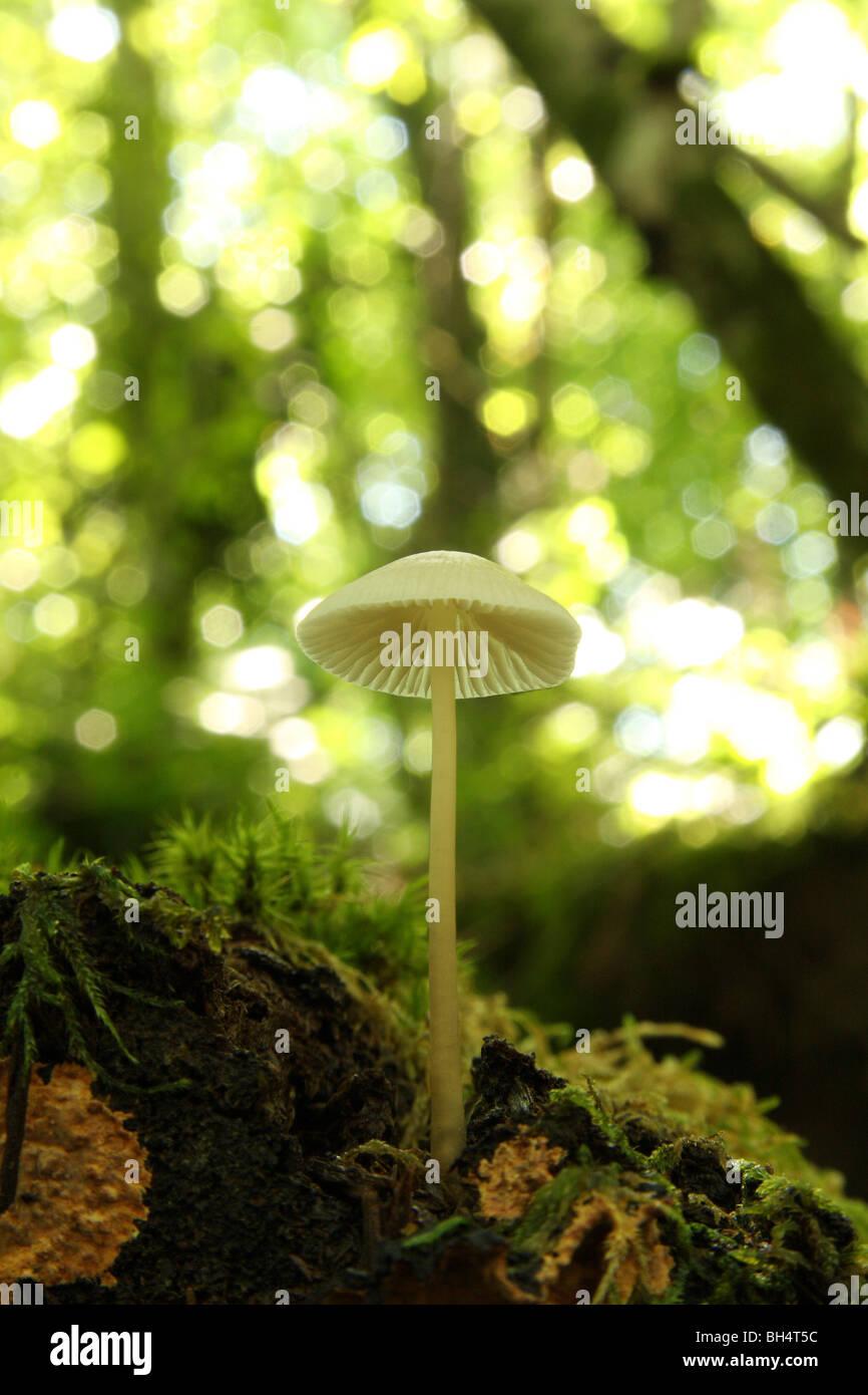 Piccolo fungo bianco visto dal di sotto. Immagini Stock