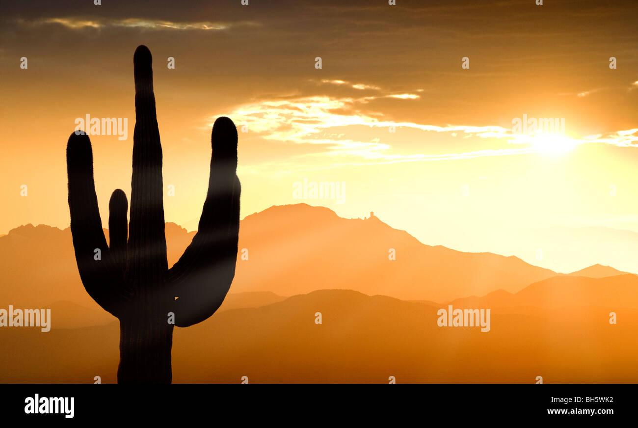 Montagne e un cactus Saguaro a sud-ovest di Tucson compresi Kitt Peak e l'Osservatorio Kitt Peak al tramonto. Immagini Stock