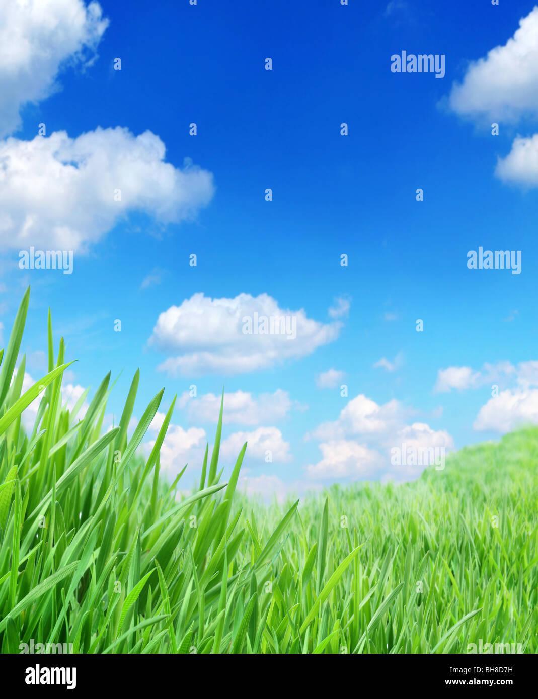 Erba verde contro il cielo Immagini Stock