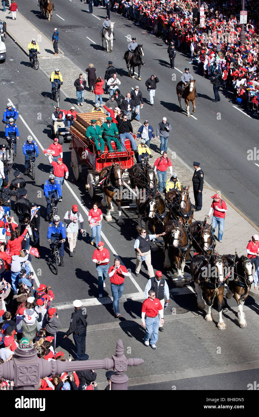 Budweiser cavallo carro, Phillies World Series vittoria Ottobre 31, 2008 con sfilata verso il basso Broad Street Immagini Stock