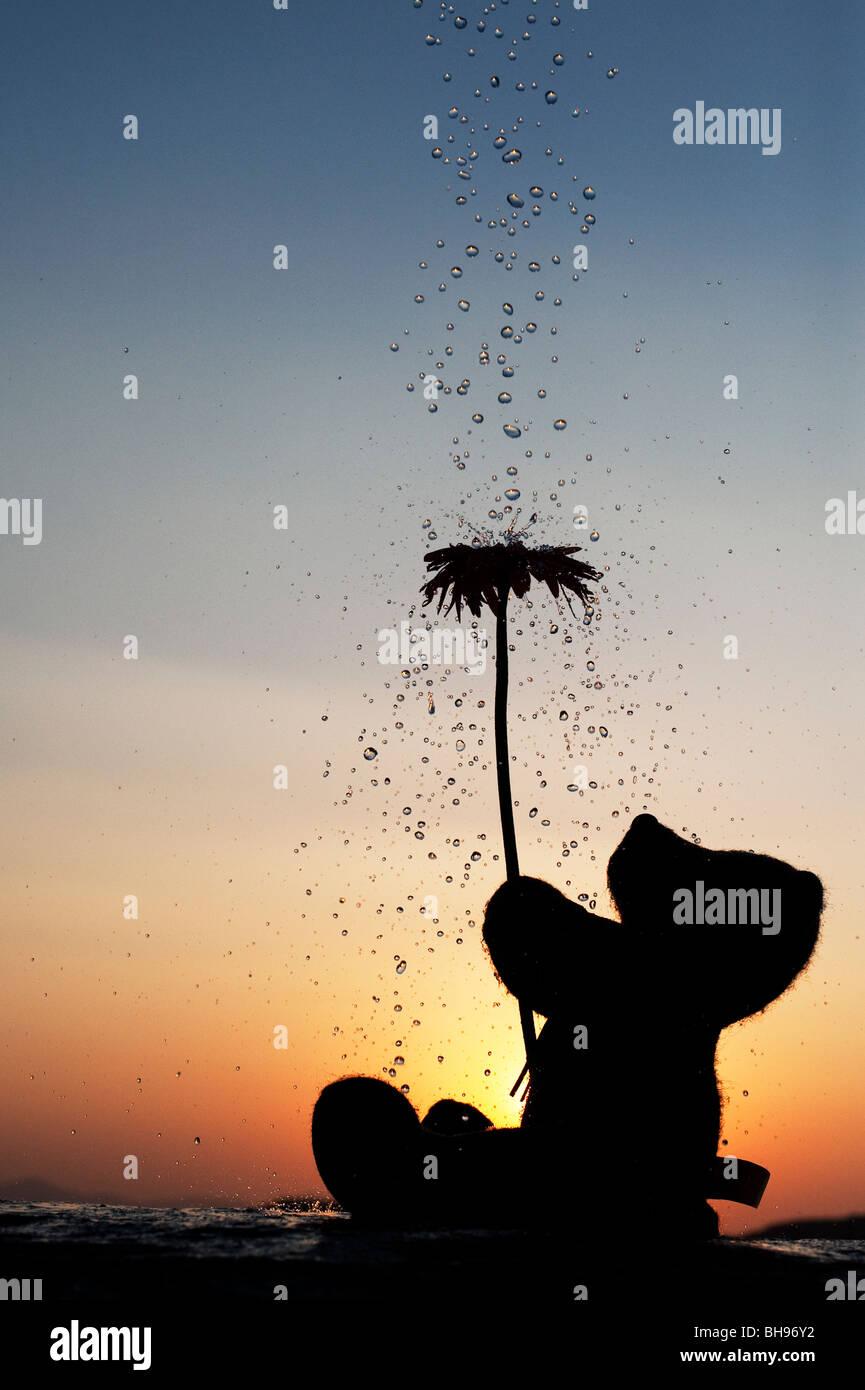 Orsacchiotto di peluche tenendo un fiore con gocce d'acqua versando su di loro al tramonto. Ancora vita silhouette Immagini Stock