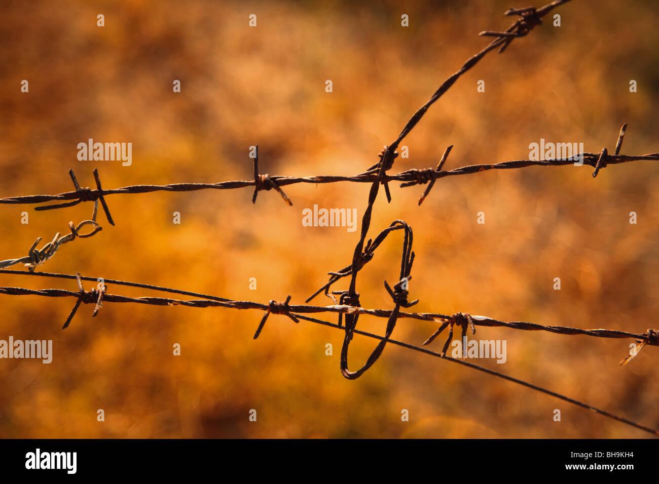 Aggrovigliato filo spinato Immagini Stock