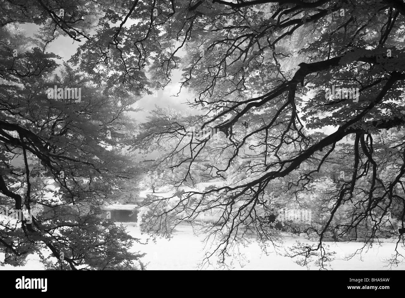Alberi a Minterne Magna, Dorset, England, Regno Unito Immagini Stock