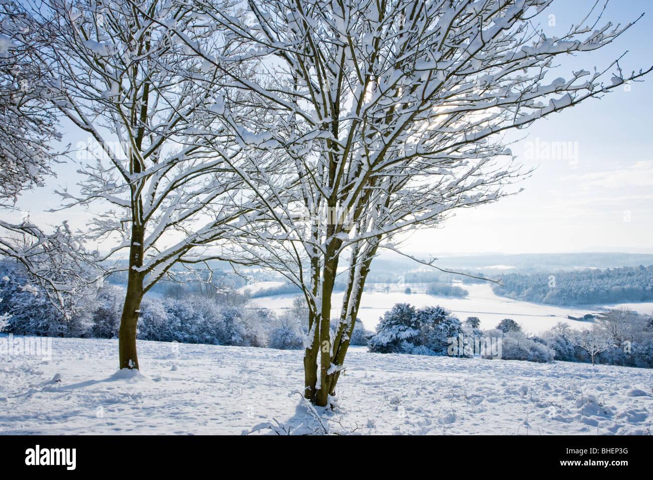 Inverno a Newlands Corner vicino a Guildford, Surrey, Regno Unito. Immagini Stock