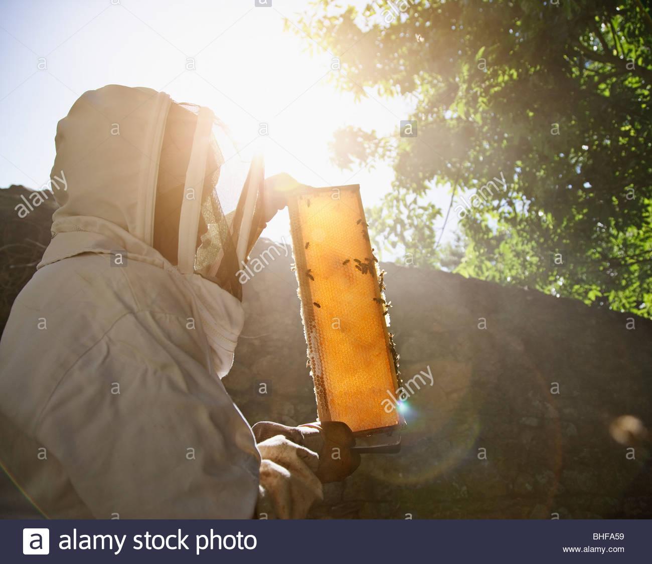 Apicoltore azienda api e favo di miele Immagini Stock