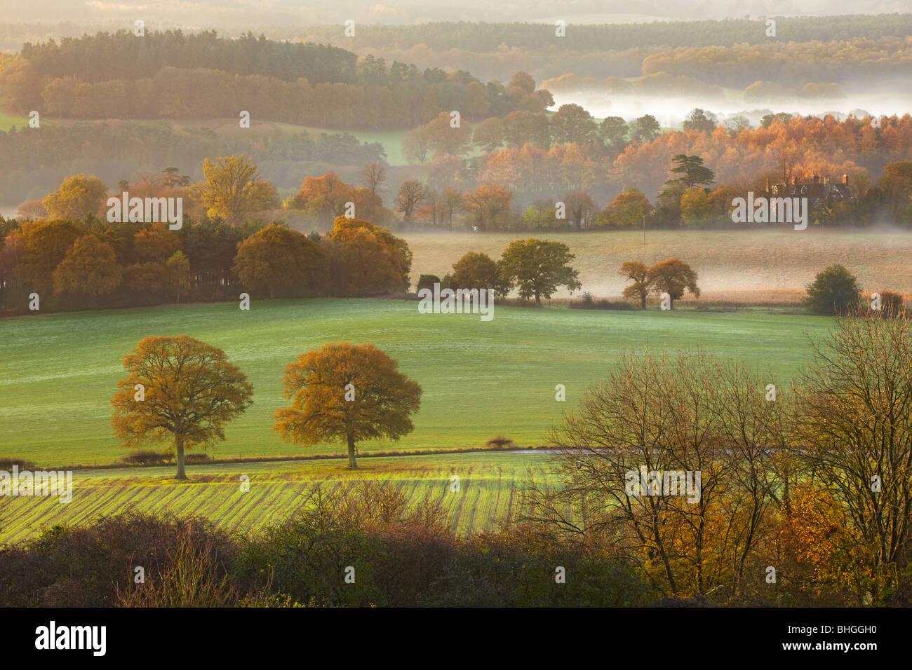 La mattina presto viste attraverso la collina da Newlands Corner guardando verso Albury Surrey Immagini Stock