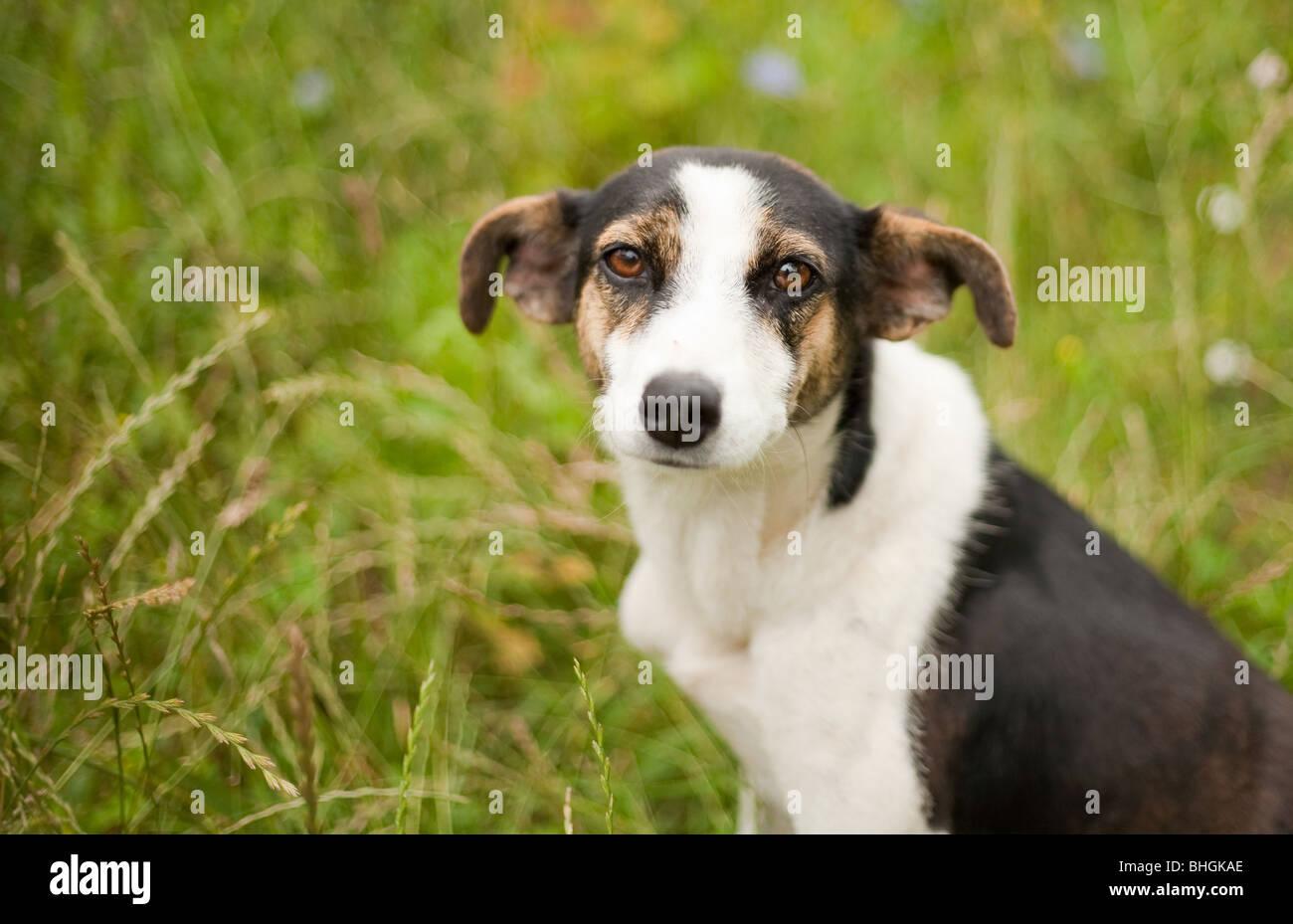 Ritratto di un adorabile cagnolino outdoor Immagini Stock