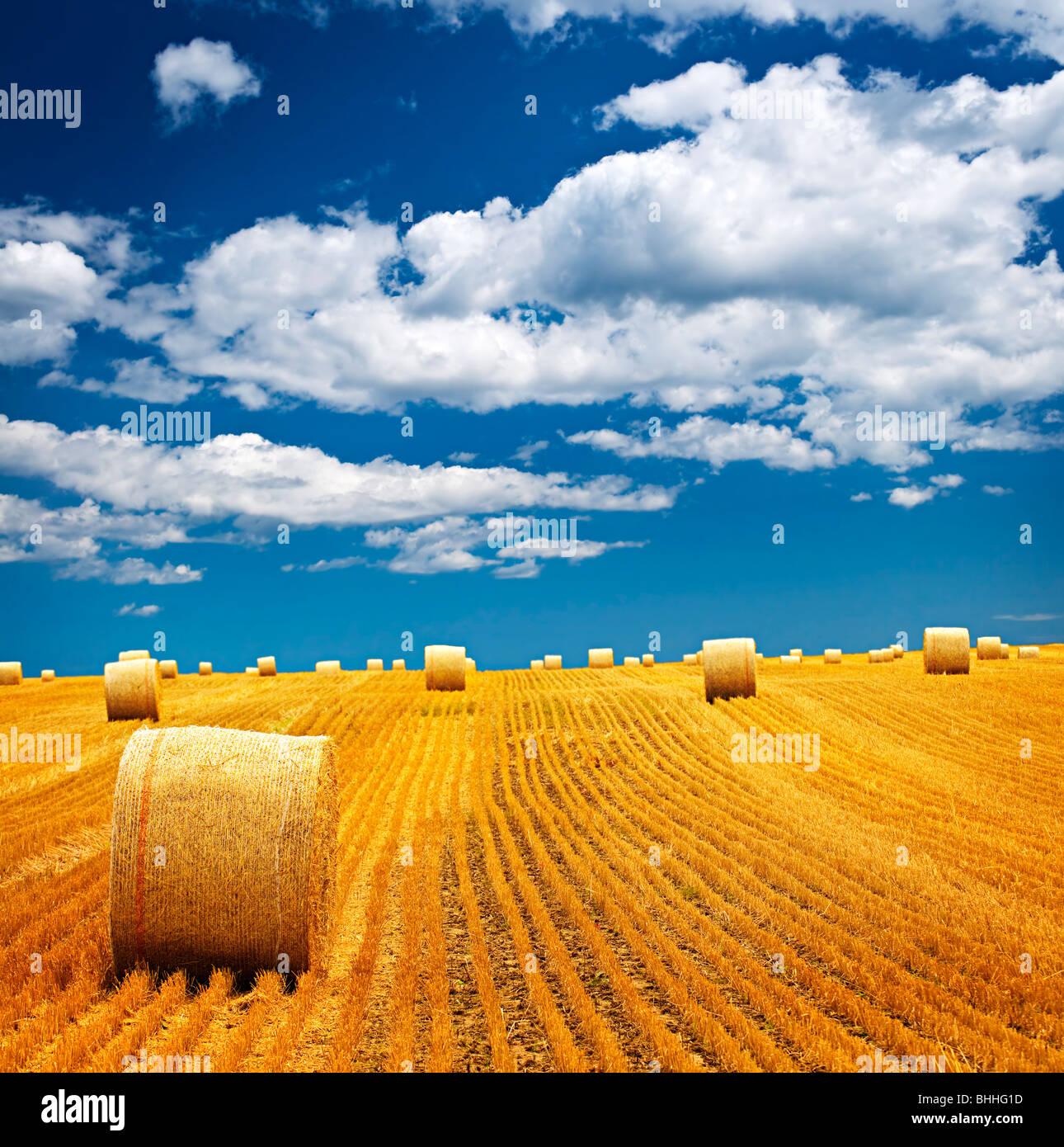 Il paesaggio agricolo di balle di fieno in un campo oro Immagini Stock