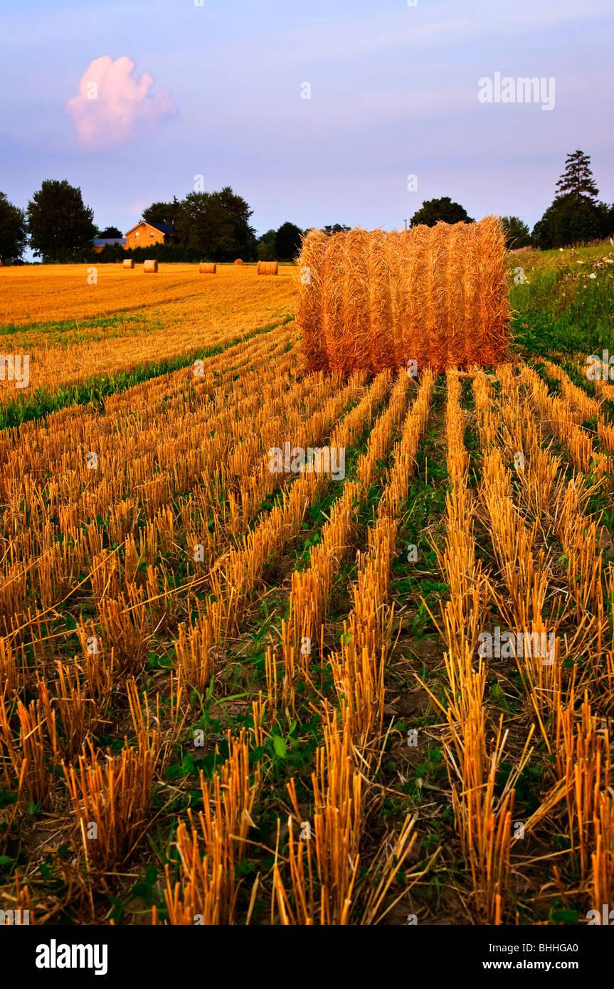 Campo di fattoria con balle di fieno al crepuscolo Immagini Stock