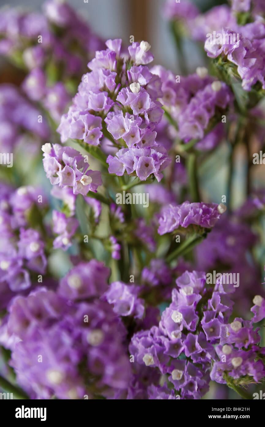 In prossimità di un fiore viola Immagini Stock