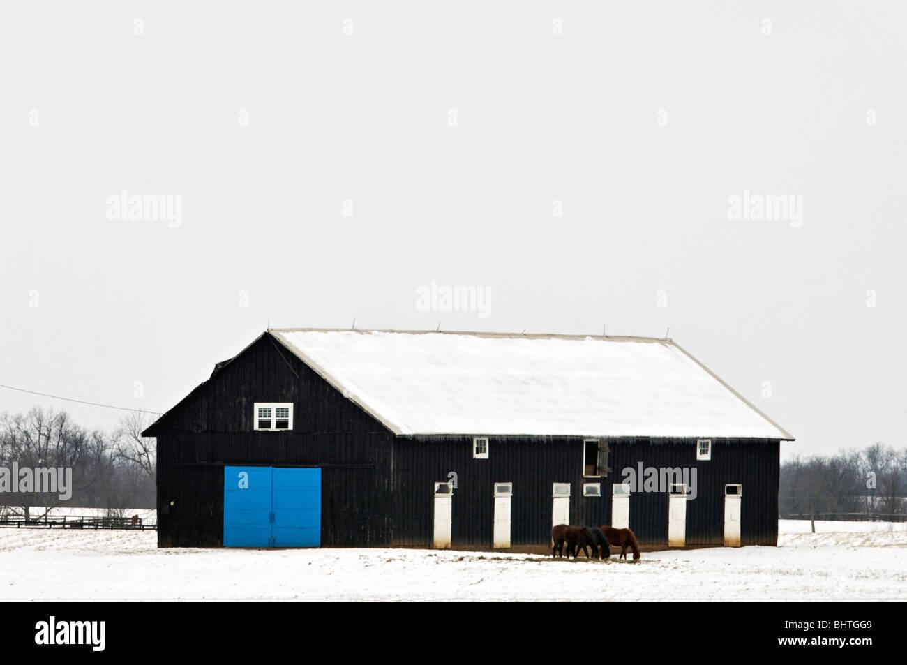 Cavallo fienile con porta blu nella coperta di neve Campo in Fayette County, Kentucky Immagini Stock