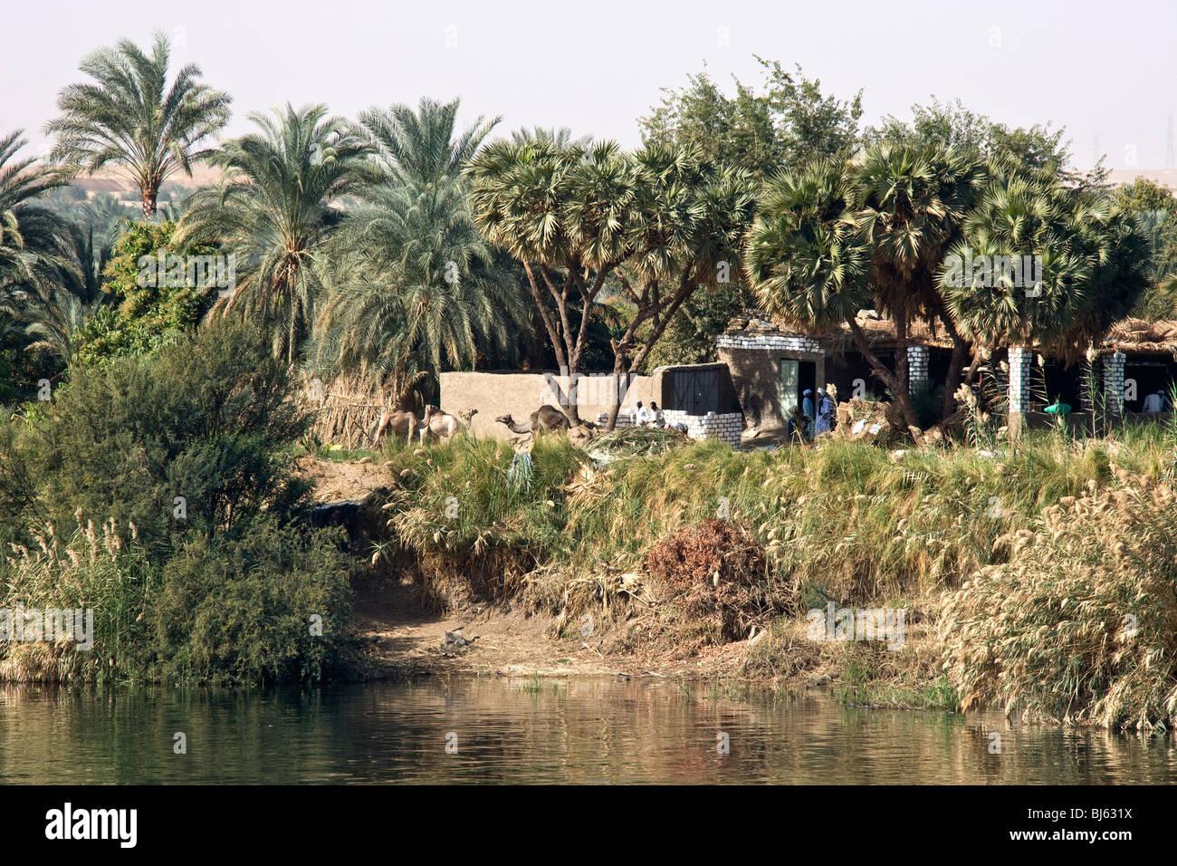 Abitare sulla banca del fiume Nilo. Immagini Stock