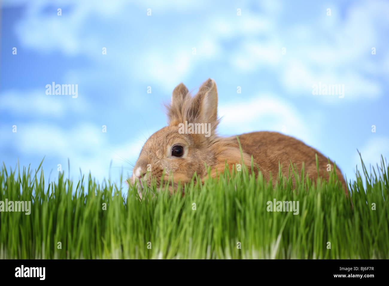 Coniglio in erba Immagini Stock
