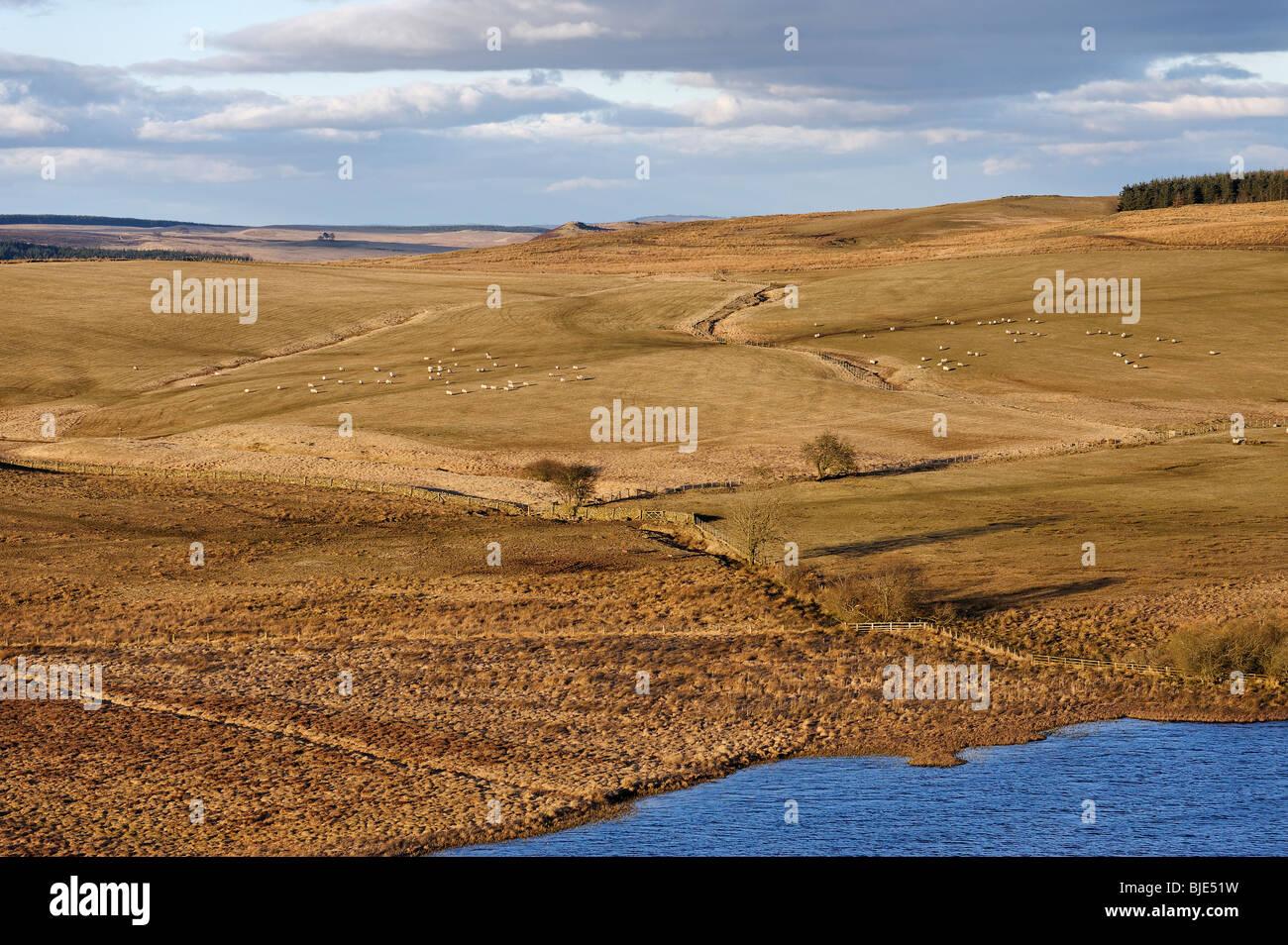 Guardando a nord da balze Highshield sulla rupe del Lough sulla sezione centrale del Vallo di Adriano percorso in Immagini Stock