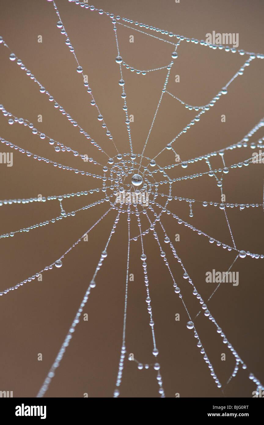 Gocce d'acqua su una spider web. Numeri in natura. Qui potete vedere il numero nove Immagini Stock