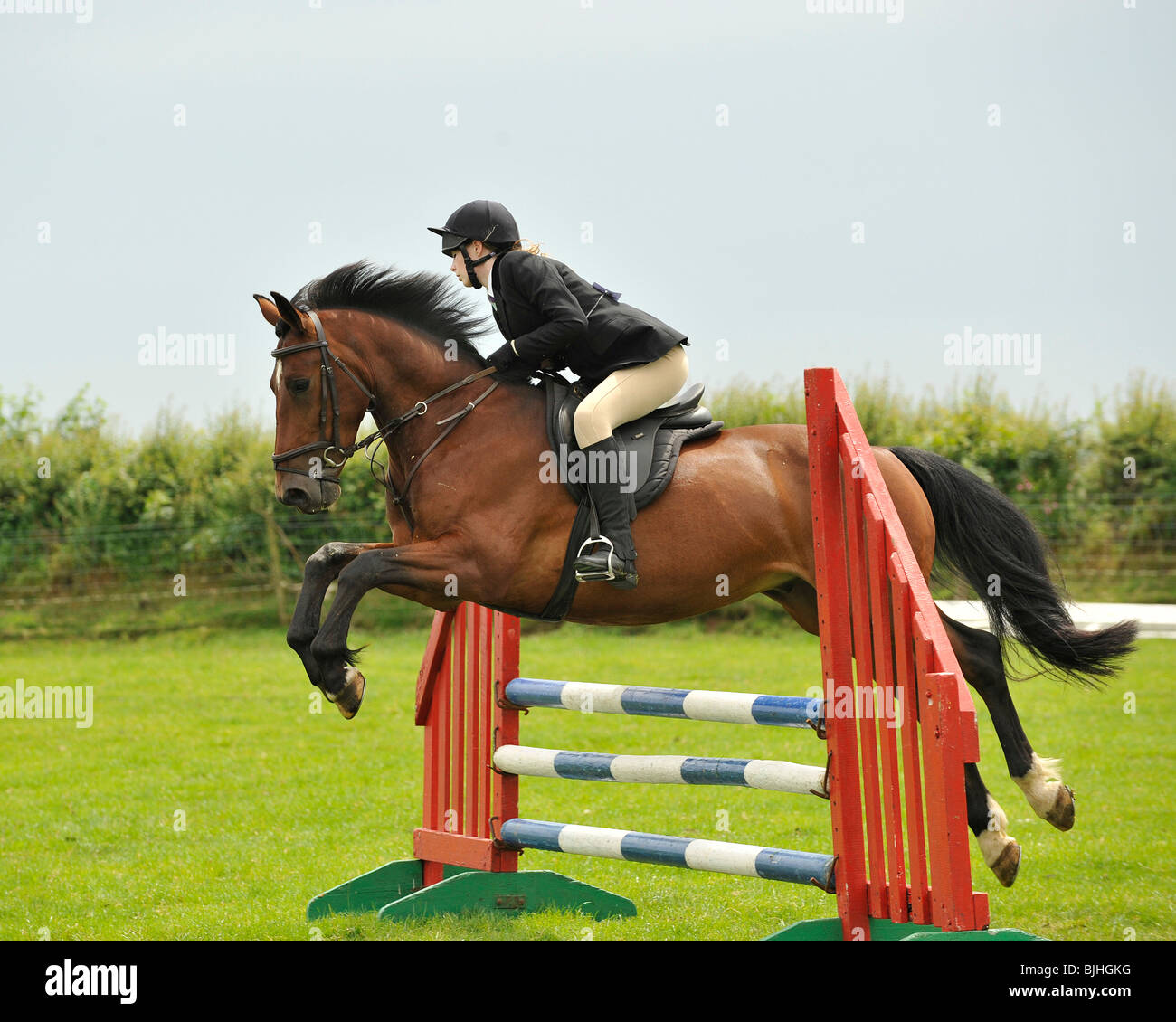 Show Jumping horse Immagini Stock