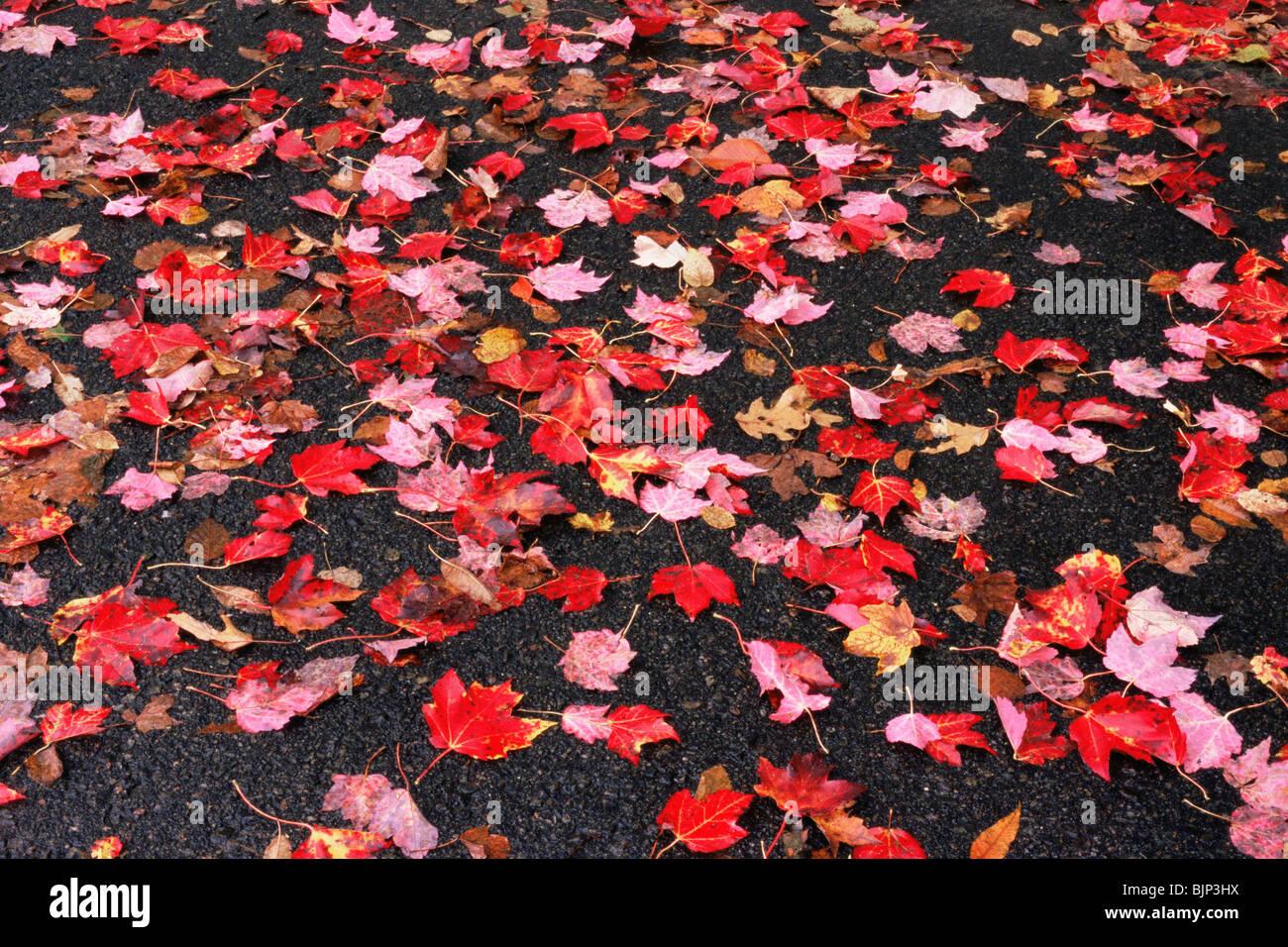 Foglie di autunno su un marciapiede Foto Stock