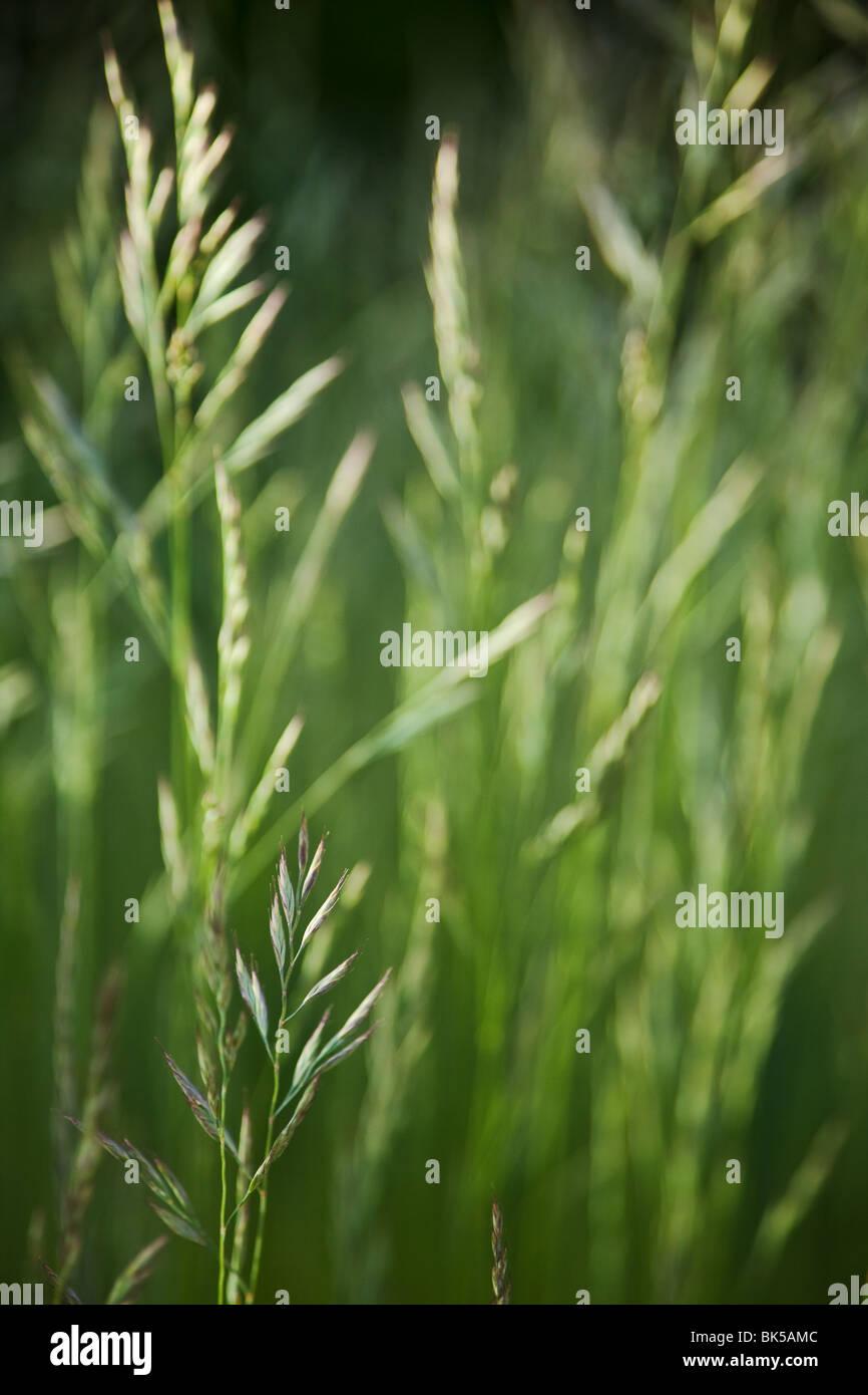 Erba verde sullo sfondo Immagini Stock