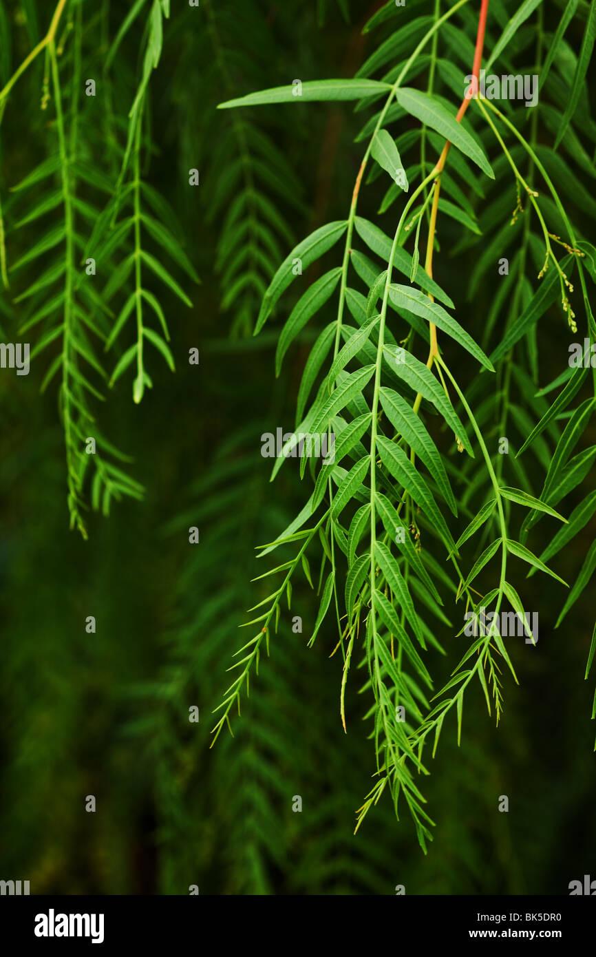 Foglia verde dello sfondo con il fuoco selettivo Immagini Stock