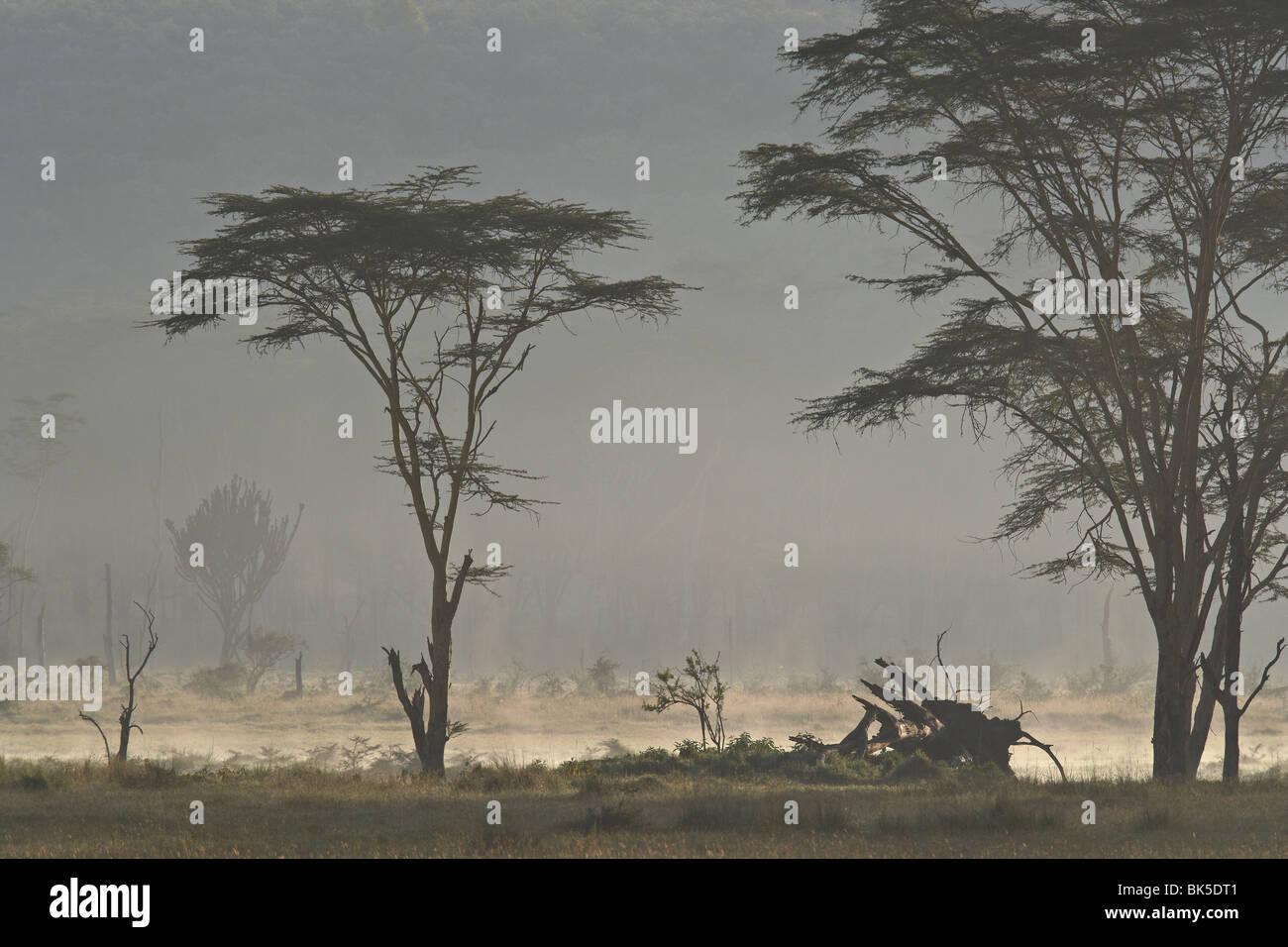Acacia e euphorbia alberi, Lake Nakuru National Park, Kenya, Africa orientale, Africa Immagini Stock