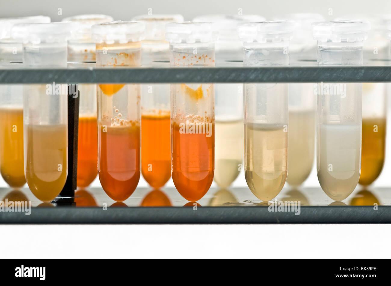 Provette con liquido di estrazione del DNA Immagini Stock