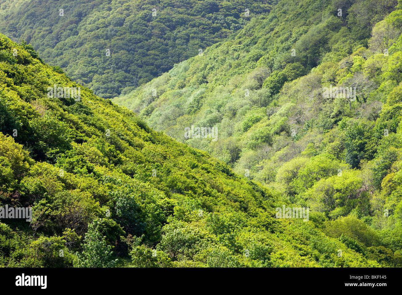 Una valle boscosa tra Heddons bocca e cacciatori Inn on the North Devon Coast, REGNO UNITO Immagini Stock